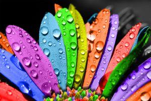 1215808_coloured_daisy